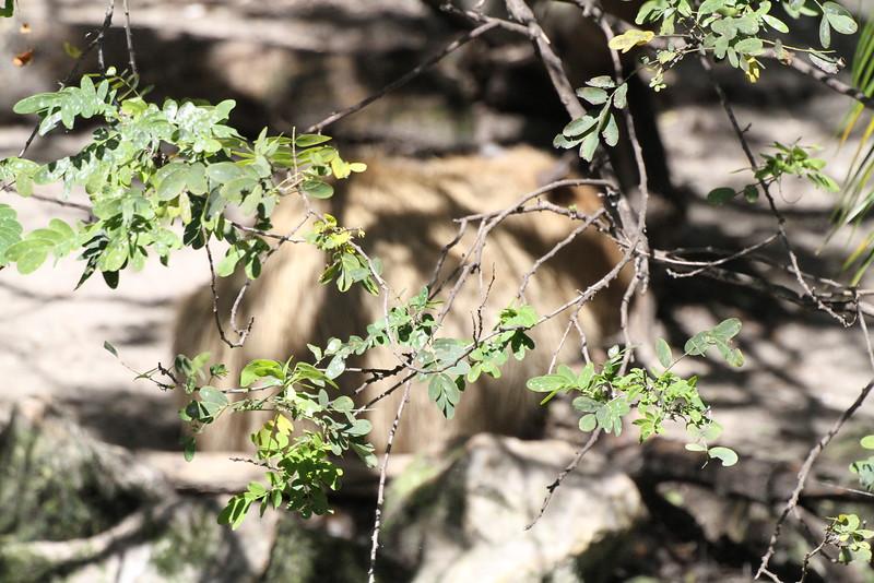 20120312 West Palm Beach Zoo (13)