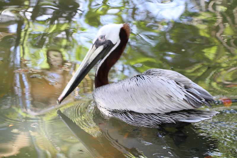 20120312 West Palm Beach Zoo (197)