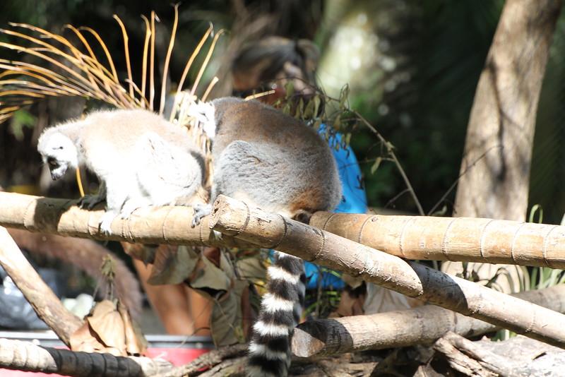 20120312 West Palm Beach Zoo (198)