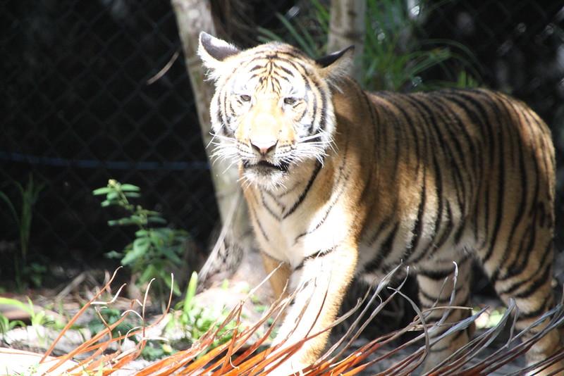 20120312 West Palm Beach Zoo (69)
