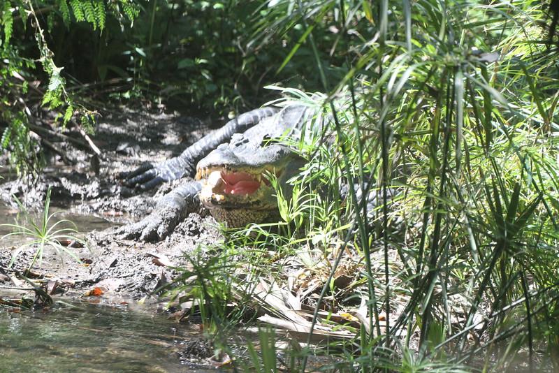 20120312 West Palm Beach Zoo (20)