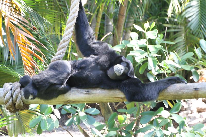 20120312 West Palm Beach Zoo (169)