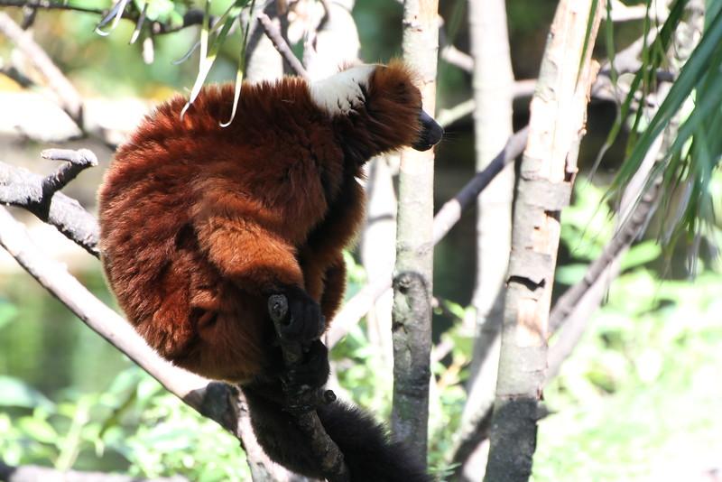 20120312 West Palm Beach Zoo (205)