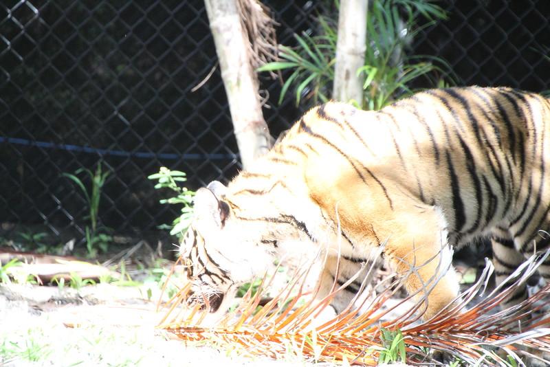 20120312 West Palm Beach Zoo (60)