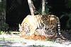20120312 West Palm Beach Zoo (62)