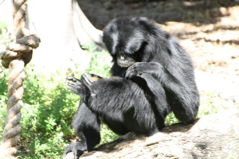 20120312 West Palm Beach Zoo (125)