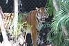 20120312 West Palm Beach Zoo (83)