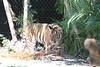 20120312 West Palm Beach Zoo (59)