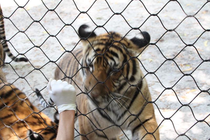 20120312 West Palm Beach Zoo (91)