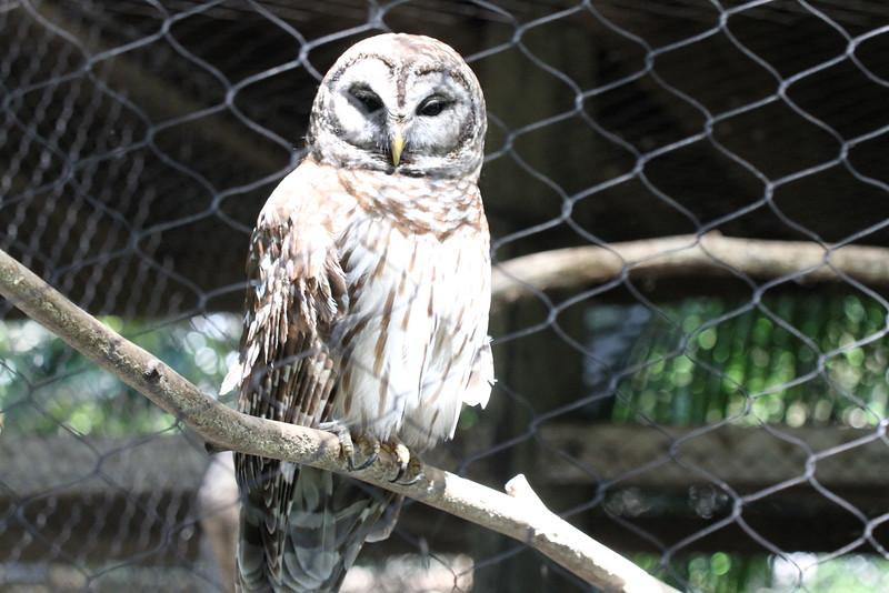 20120312 West Palm Beach Zoo (9)