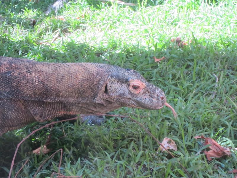 20120312A West Palm Beach Zoo (21)