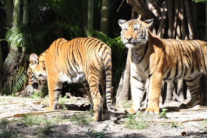 20120312 West Palm Beach Zoo (79)