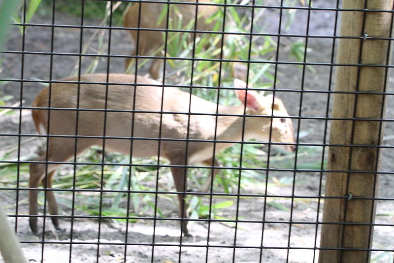 20120312 West Palm Beach Zoo (40)