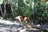 20120312 West Palm Beach Zoo (48)
