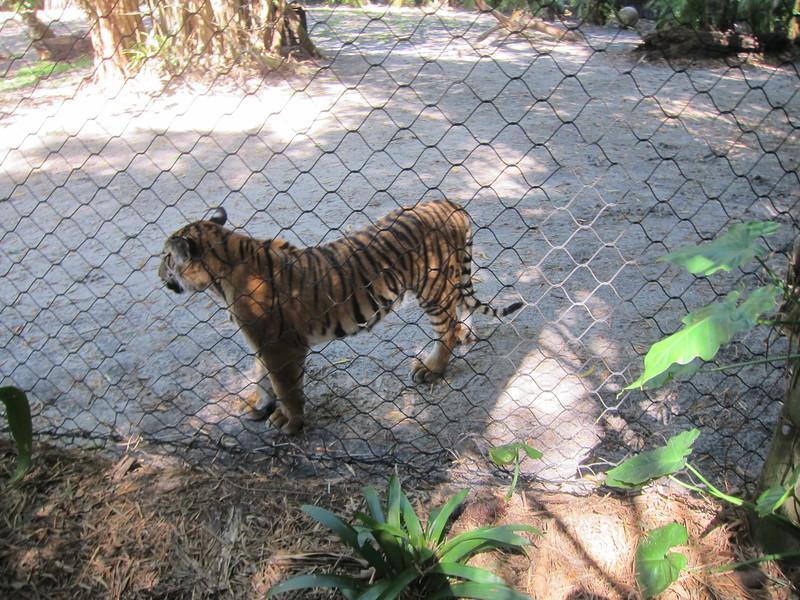 20120312A West Palm Beach Zoo (34)