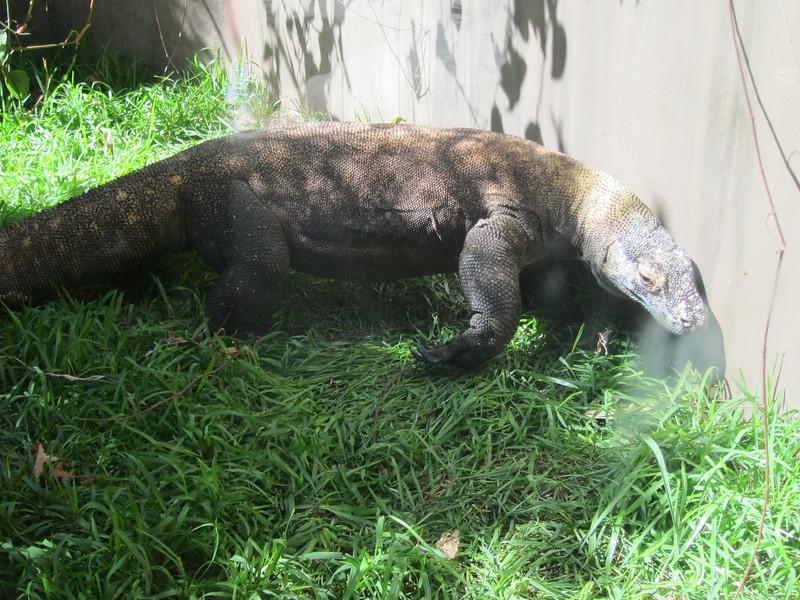20120312A West Palm Beach Zoo (20)