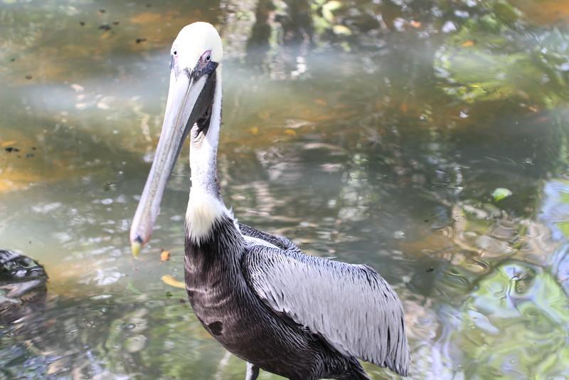 20120312 West Palm Beach Zoo (195)