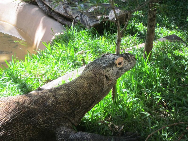 20120312A West Palm Beach Zoo (24)