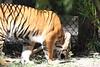 20120312 West Palm Beach Zoo (44)