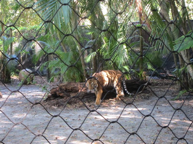 20120312A West Palm Beach Zoo (36)