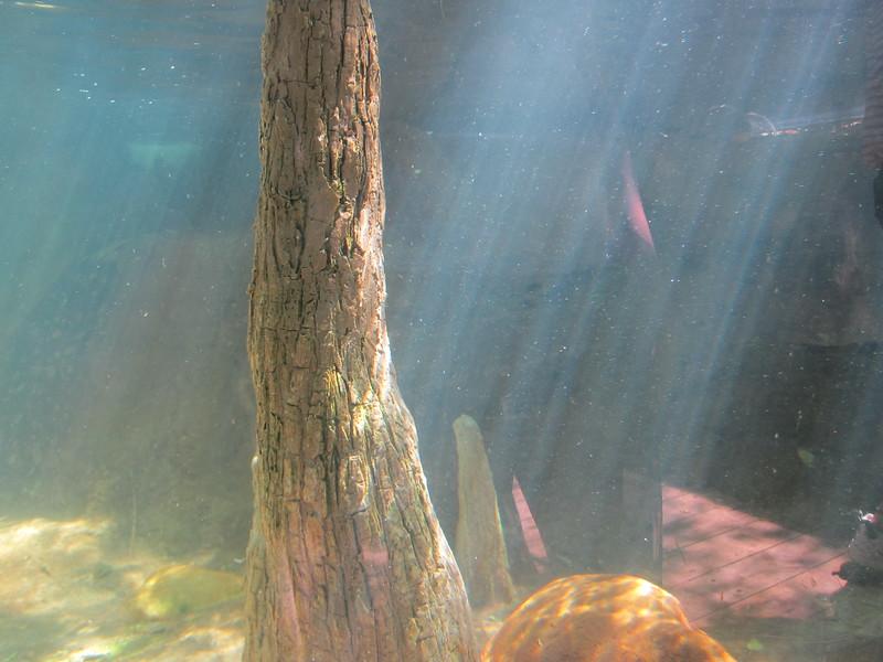 20120312A West Palm Beach Zoo (42)