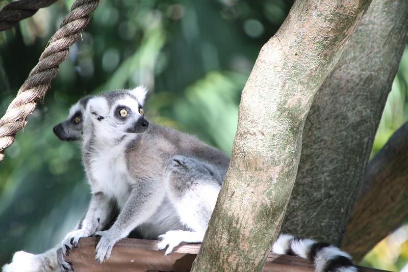 20120312 West Palm Beach Zoo (167)