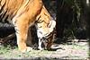 20120312 West Palm Beach Zoo (46)