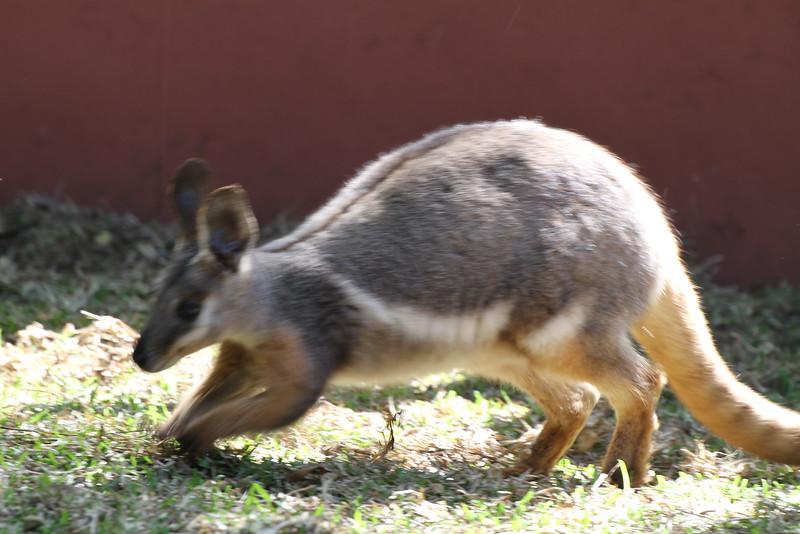 20120312 West Palm Beach Zoo (149)