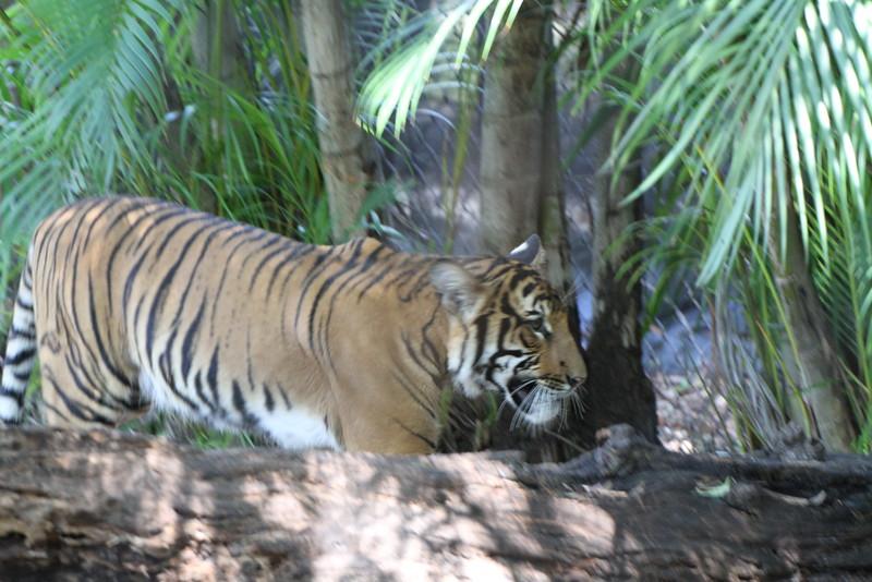 20120312 West Palm Beach Zoo (50)