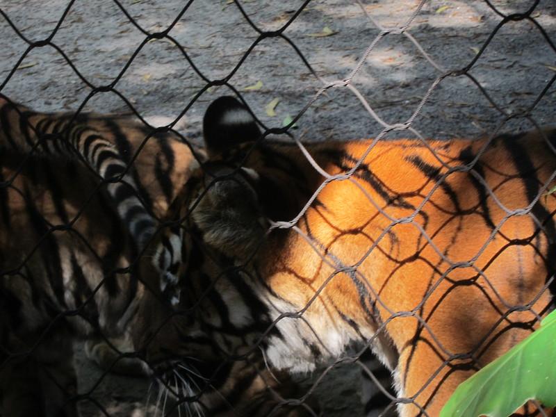 20120312A West Palm Beach Zoo (28)