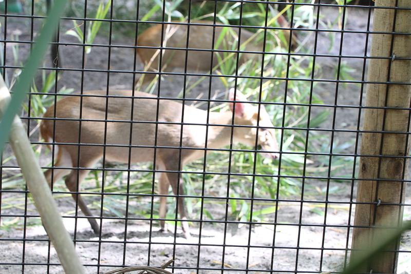 20120312 West Palm Beach Zoo (39)