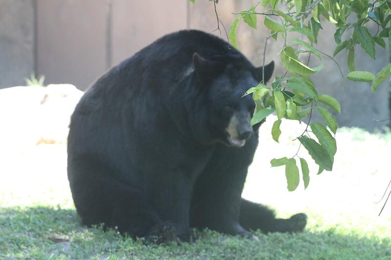 20120312 West Palm Beach Zoo (19)