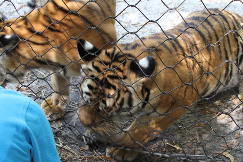 20120312 West Palm Beach Zoo (87)