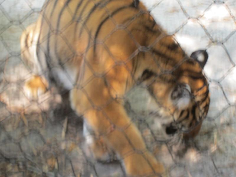 20120312A West Palm Beach Zoo (31)