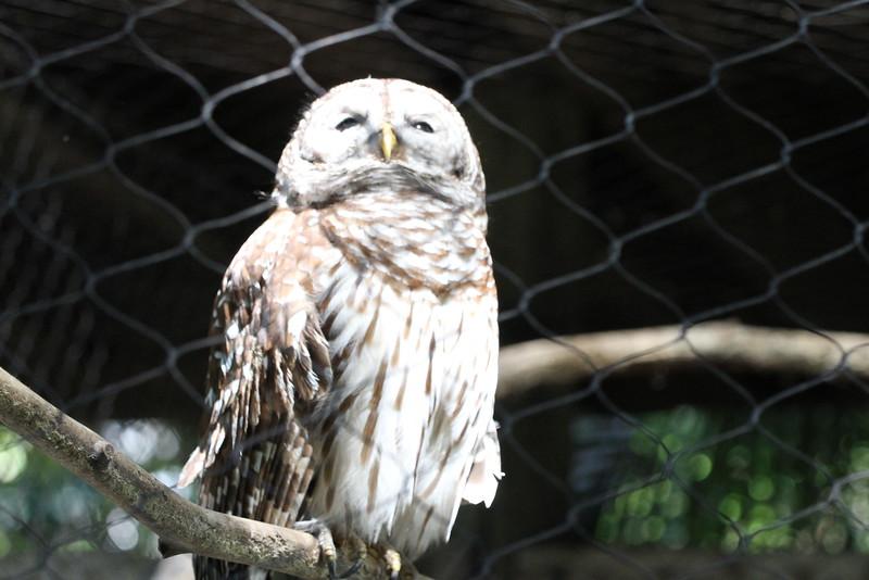20120312 West Palm Beach Zoo (8)