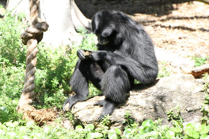 20120312 West Palm Beach Zoo (122)