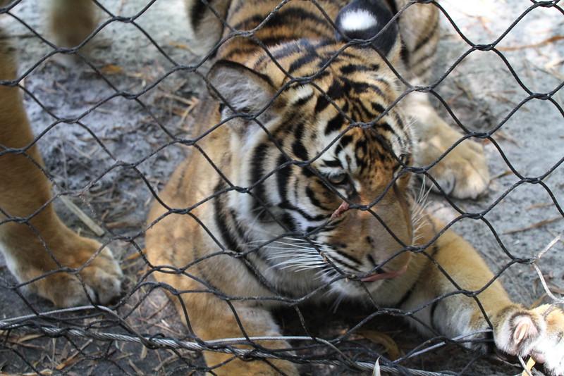 20120312 West Palm Beach Zoo (86)