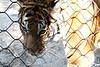 20120312 West Palm Beach Zoo (98)