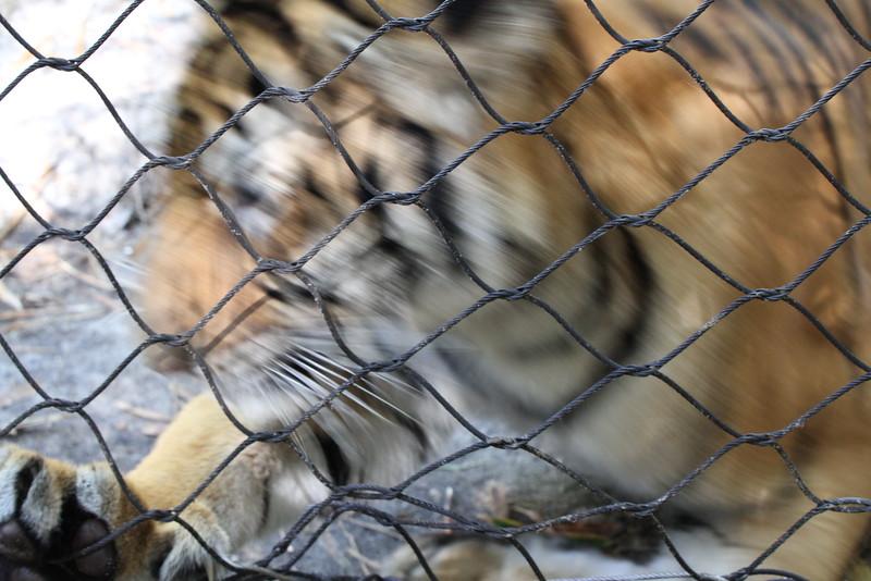 20120312 West Palm Beach Zoo (85)