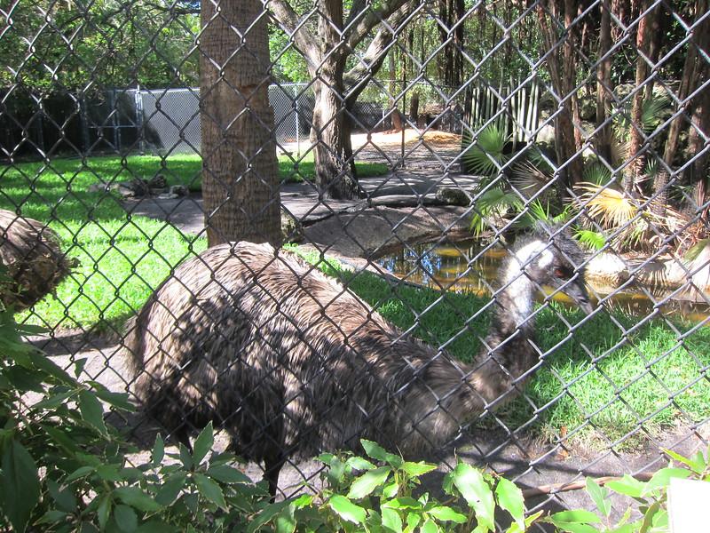 20120312A West Palm Beach Zoo (17)
