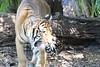 20120312 West Palm Beach Zoo (55)