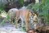 20120312 West Palm Beach Zoo (49)
