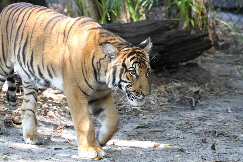 20120312 West Palm Beach Zoo (56)