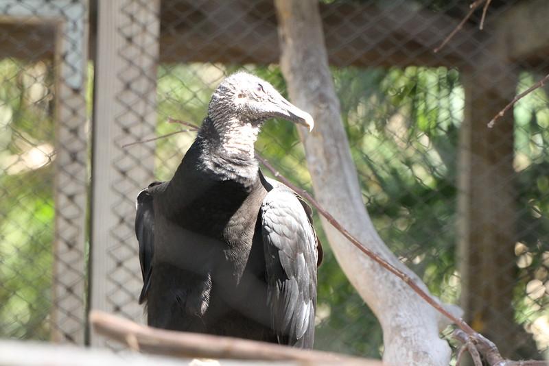 20120312 West Palm Beach Zoo (6)