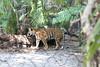 20120312 West Palm Beach Zoo (51)