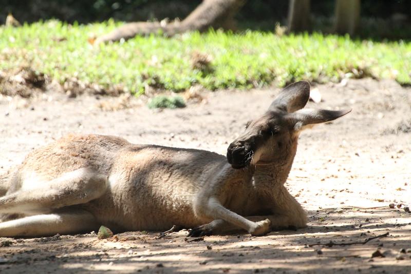 20120312 West Palm Beach Zoo (35)