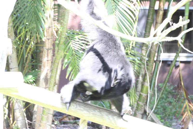 20120312 West Palm Beach Zoo (107)