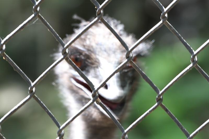 20120312 West Palm Beach Zoo (146)