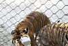20120312 West Palm Beach Zoo (92)