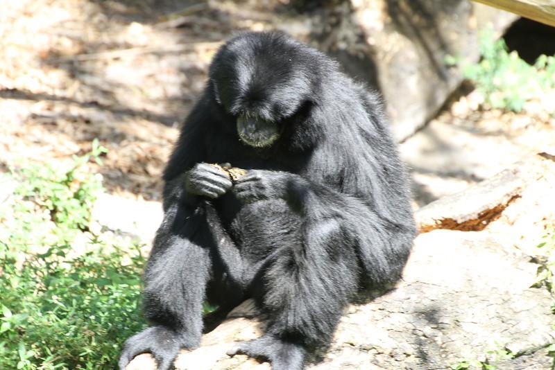 20120312 West Palm Beach Zoo (130)